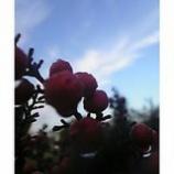 『南天と冬の雲』の画像