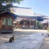 四天王寺・茶臼山界隈にある法然上人が開いた浄土宗のお寺『一心寺』写経堂では写経体験も!