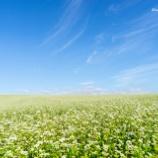 『そば畑Buckwheat field.』の画像