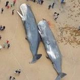 『「クジラの死は、人類が海洋生物を無視するという象徴的なものです」』の画像
