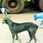 【GIF】ロシアの女さん、野良犬に食い殺されるwwwwwww