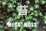 MEGA MOSS - 交野の里山の苔の物語-