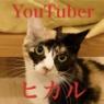最終報告★猫式総選挙結果発表