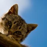 『猫を飼っている女性は肺がんのリスクが2.85倍になる(米ジョージアサザン大学の研究チーム調べ)』の画像