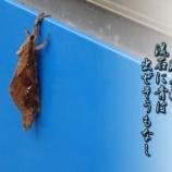 『蛾の特技』の画像