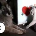 ネコが犬の前足をチョイチョイする。ねぇねぇ、機嫌直して → 2匹はケンカの後ですか?…