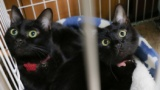 うちの黒猫可愛いから見てってくれ(※画像あり)