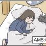 猫の寝床の真実