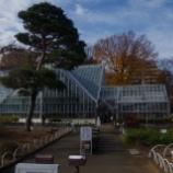 『12月のトイ率薬用植物園;小平市』の画像
