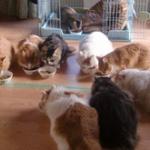去勢せず猫を繁殖、最後は猫9匹を借家に密閉して10日以上放置 → 5匹は白骨に