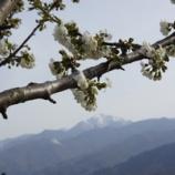 『春霞み甲斐駒』の画像