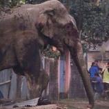 『理想的な棲み分け:インドで大暴れになった野生のゾウ』の画像