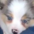 子イヌが足元にやってきた。トコトコ、ぎゅっ♪ → 犬好きは萌え死にます…