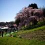 平成最後の三春滝桜(後編) 三春滝桜・二岐温泉大丸あすなろ荘・南湖の桜ツアー2019(3)