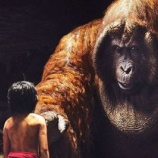 『菜食:タイソンと史上最大の霊長類ギガントピテクス』の画像