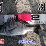 『今週も強風の中の釣り!柳井市の黒鯛釣り #046』の画像