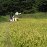 『稲刈りも後半に入りました』の画像