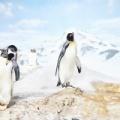 1957年1月29日は、「南極大陸の昭和基地開設記念日」