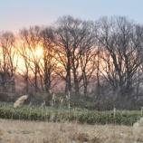 『1月4日 曇り雪で今日も日の出は‥』の画像