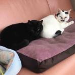 みにみゅう 猫の飼い主さん募集中