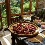 有機無農薬栽培茶 国友農園
