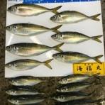 走水港 海福丸[今日の釣果]
