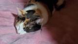 猫がめっちゃ気持ち良さそうに寝てやがる(※画像あり)