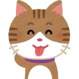 『【衝撃】猫、やっぱり液体だった』の画像