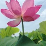 『Master Jisho Matsumoto Online Zen Gatherings with English translation』の画像