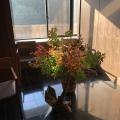 10月17日 伊香保温泉 福一の今週の花便り【館内】