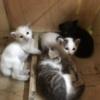 男「猫だ、かわいいなぁ」猫「>>3」