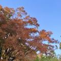 ご近所の紅葉2020🍁