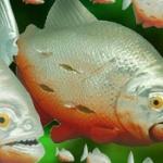 猛魚襲来。「危険生物大百科 人類大パニック」可動フィギュアになってガチャに登場!