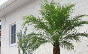 トロピカルな風情がある観葉植物
