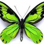 【画像】地球上で最も美しい生物wwwwwwwwwww