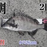 『スランプを抜け出せない!山口県柳井市の黒鯛(チヌ)釣り #039』の画像