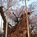 『 真の美しさと山高神代桜』の画像