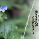 『箸置きのある生活』の画像