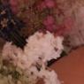 【ダイソー】この容器がベスト!白い花が沢山出来ました♪