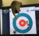 人気のカーリング、ネコにも大人気! 「カーリングのお手伝いはもう大丈夫だから…お願いテレビから離れてえええ」