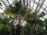 『ときわミュージアム世界を旅する植物館に行ってきた(前編)』の画像