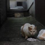 『西新宿』の画像