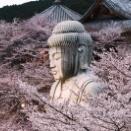 壷阪寺の桜大仏。