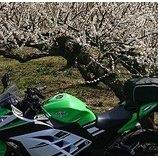 『バイク用品もAmazonのセールで出品されるご様子』の画像