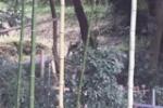 10月になってから『野生の猿』がチョイチョイと目撃されてるみたい~直近ではかいがけの道近くで農家さん目撃~