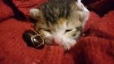 嵐の後に子猫拾った。助けてくれ(※画像あり)