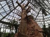 『ときわミュージアム世界を旅する植物館に行ってきた(後編)』の画像