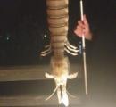 体長45センチの蝦蛄のような生き物が釣れた