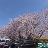 『花の季苑/平成最後のお花見に行ってきました!!』の画像