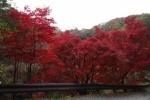 くろんど園地の紅葉がいい感じ!~アウトドアショップで買った山メシ持って、行ってきた!~